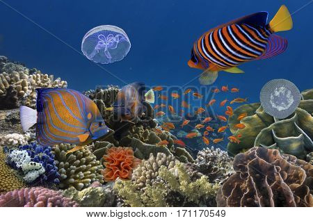 Underwater image of coral reef and tropical fishes. Red Sea. Egypt