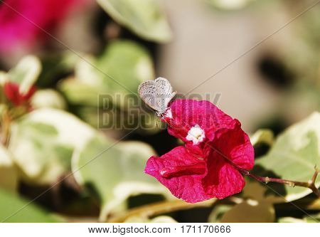a very tiny cute butterfly perched on a red flower