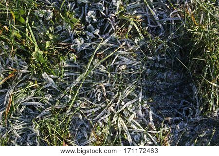 Frozen grass/The frozen grass in the middle winter.