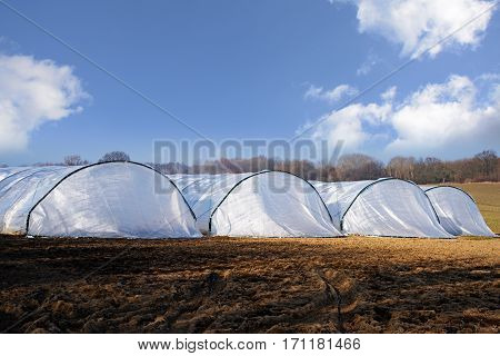 Greenhouse tunnels made of polythene plastic in a row on an agricultural field rural landscape with blue sky and white clouds copy space selective focus