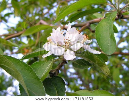 photography with scene of the flowering apple tree