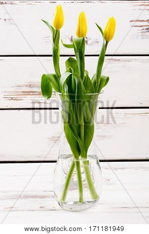 Flowers in glass vase. Tulips in vase on wood. Spread freshness in house. Cute and simple gift.