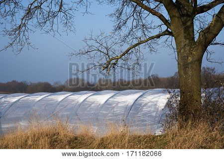 Greenhouse tunnel from polythene plastic under a tree on an agricultural field blue sky copy space