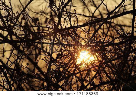 Sunset behind bushes/This is a sundown behind bushes.