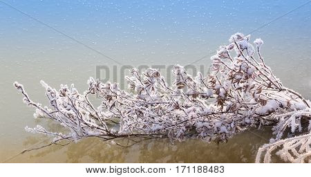branch with yellow leaves covered by hoarfrost on a background of water and ice