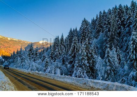 Synevyr Ukraine - January 28 2017: The car rides on the road that leads to the spruce covered with snow in the evening light.