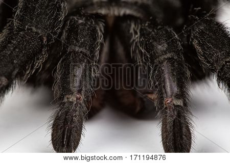 Isolated macro photo of spider on white background