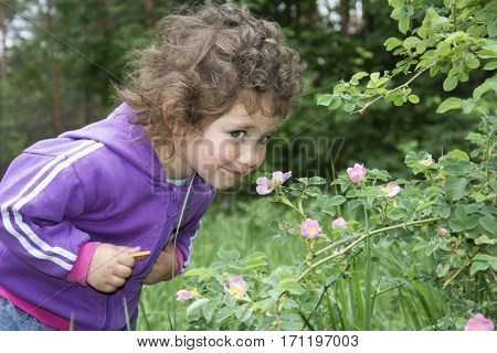 Spring in the forest a little curly funny girl smelling a flower of wild rose.