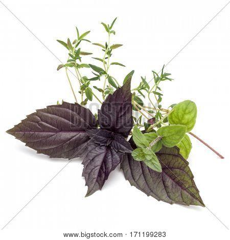 Fresh herb leaves variety isolated on white background. Purple dark opal basil, oregano, thyme.