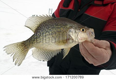 Fisherman holding up a trophy crappie caught while ice fishing