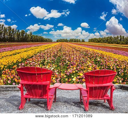 Convenient red chairs on a flower meadow. The concept of eco-tourism. Rustic vacation