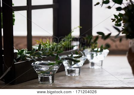 Composition with succulently, greens. Beautiful glass candle holders. a minimalist composition. A sense of simplicity and freshness. Tree white-gamma green