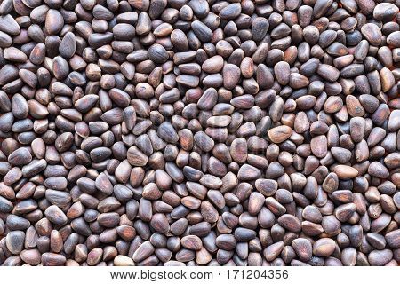 dried seed or grains of cedar for a background and texture closeup of speckled color