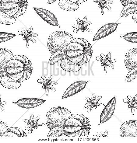Hand made vector seamless sketch of mandarins made in vintage style.