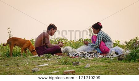 People Harvest Fish In Mandalay, Myanmar