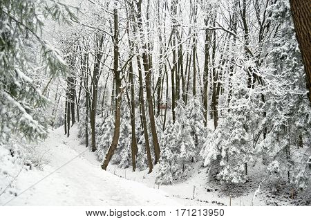 Road At Snowbound Winter Forest In Overcast. Beautiful Winter Landscape
