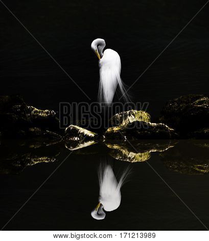 Reflection of grooming egret on the rocks.