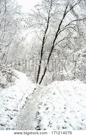 Path at a snowbound winter forest. Beautiful winter landscape.