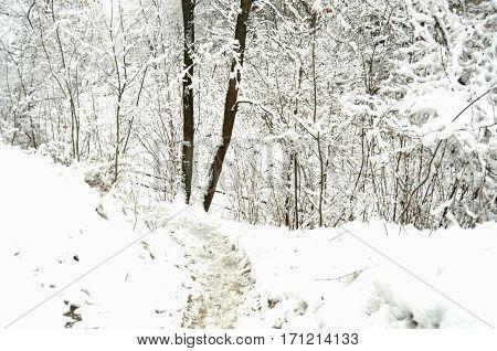Path At A Snowbound Winter Forest.