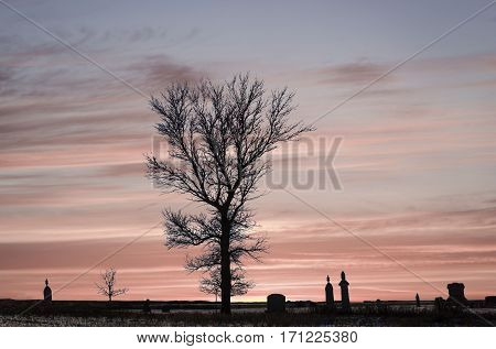 horizontal image of a silhouette bare tree with graves and headstones scattered across the image with a beautiful pink sunset in the background.