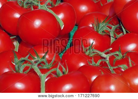 Fresh vine tomatoes on market stall