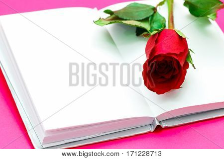 Single Simple Of Red Rose Over White Opened Book On Pink Background, Valentine Day Concept