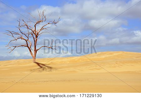 Dead tree in deserted sand dune under blue sky. Drought, climate change concepts and surreal landscape. Digital photo manipulation. Copy space for text.