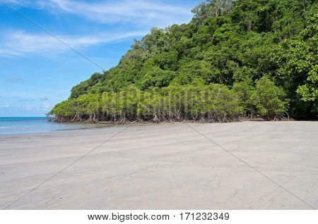 mangrove forest and beach on coral sea coast at cape tribulaton in north queensland australia