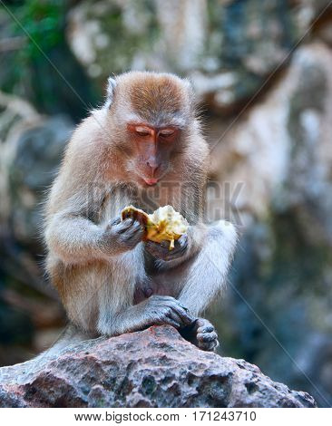 sitting monkey with fruit