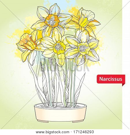 Vector bouquet with outline narcissus or daffodil flowers in round pot on the pastel background. Ornate floral element for spring design, greeting card. Bunch of narcissus flower in contour style.