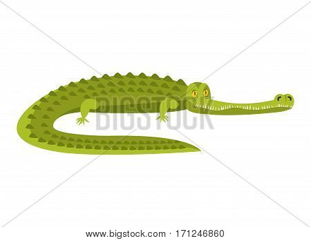 Crocodile Isolated. Alligator On White Background. Water Reptile Predator