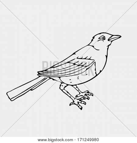 Hand-drawn pencil graphics,small bird, jackdaw, magpie, bird, blackbird, nightingale, siskin, crow. Engraving, stencil style. Black and white logo, sign, emblem, symbol. Stamp, seal. Simple illustration. Sketch.
