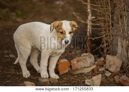 Brave stray puppy sitting waiting for the mom's return in sinister place