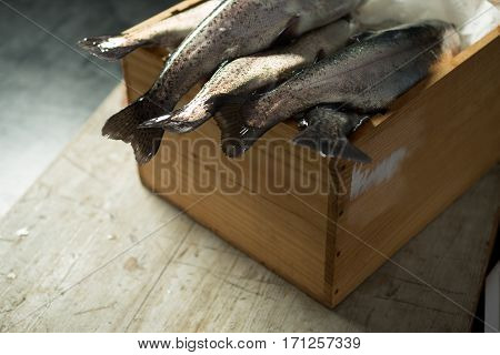 Rainbow Trout Tail Fins Dangling From Wooden Box