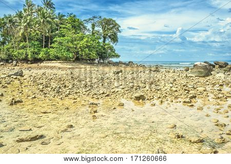 Deserted ocean shore with palm grove after a rain on a background of the cloudy sky