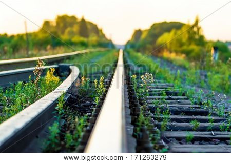 Macro rails railway train  in green grass