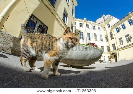 Cat in courtyards ordinary in St. Petersburg