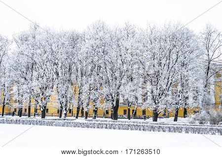 Snow covered trees in the Alexander Garden winter