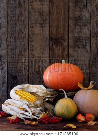 Pumpkin And Ripe Corn On Wooden Background. Rustic Photo For Autumn Postcards. Selective Focus