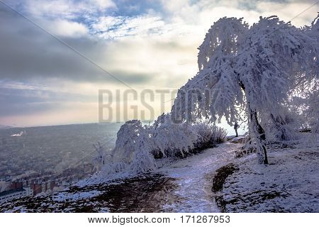 Winter landscape, the frozen trees in white snow, frosty, solar evening, the evening sky