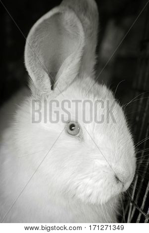 Portrait of the white rabbit in a hutch