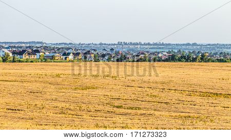 Landscape with a rye field and suburban houses on the horizon. Rural landscape. Belgorod region Russia.