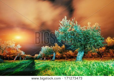 Fantastic views of the garden and the starry sky through the clouds. The Mediterranean climate. The magnificent and picturesque scene. Sicily. Italy, Europe.