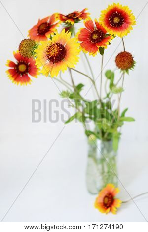 Echinacea red and yellow flowers in transparent vase