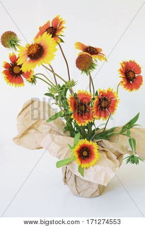 Echinacea red and yellow flowers in paper vase white background