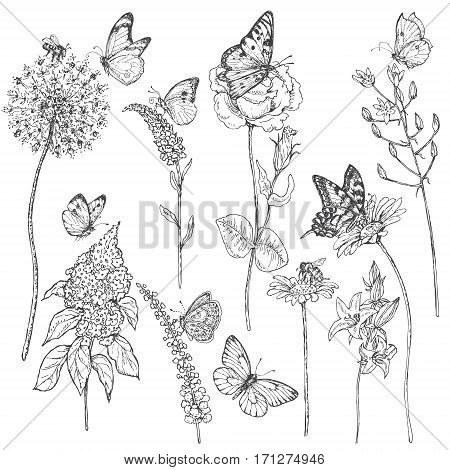 Hand drawn set of butterflies bees and wildflowers. Set of monochrome flying and sitting insects near the flowers. Black and white doodle floral elements. Vector sketch.