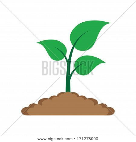 Sprout in the ground. green leaves plant in the ground growing of plants. Vector Illustration