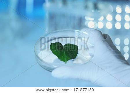 Female hand in glove holding Petri dish with plant leaf on blurred background