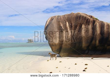 Granitic rocks in Anse Source D'Argent, Seychelles