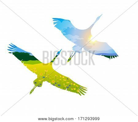 two birds in flight on a white background